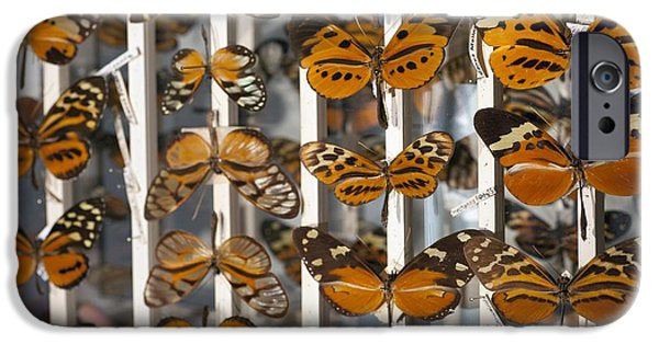 Bates iPhone Cases - Muller Butterfly Tiger Mimicry Complex 2 iPhone Case by Paul D Stewart