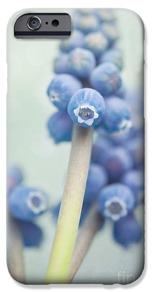 Flower Still Life iPhone Cases - Muscari iPhone Case by Priska Wettstein