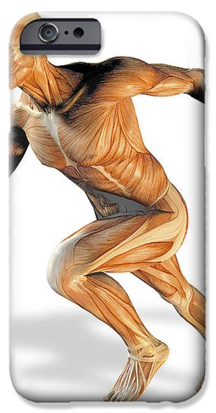 Muscular System iPhone Case by Victor Habbick Visions
