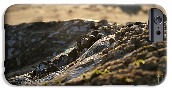 Ventura California iPhone Cases - Mussels Sunset iPhone Case by Henrik Lehnerer