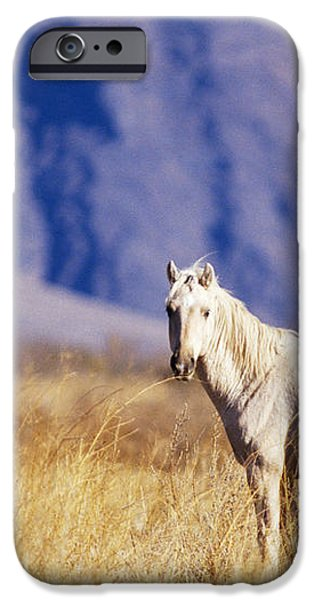 Mustang iPhone Case by Mark Newman and Photo Researchers