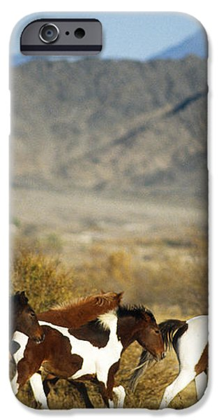 Mustangs iPhone Case by Mark Newman and Photo Researchers