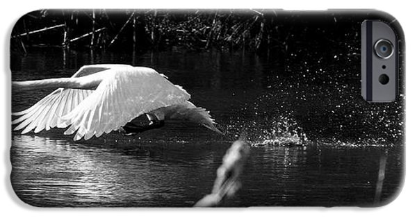 Swans... iPhone Cases - Mute Swan in flight Limerick Ireland iPhone Case by Pierre Leclerc Photography
