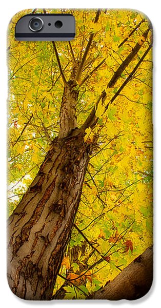 My Maple Tree iPhone Case by James BO  Insogna