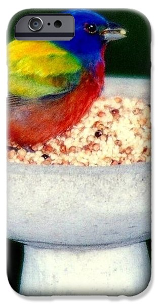 My Painted Bunting iPhone Case by KAREN WILES