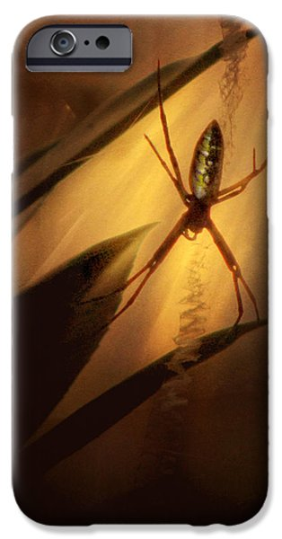Spider iPhone Cases - My Parlour iPhone Case by Amy Tyler