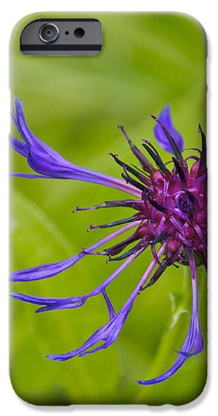 Mystery Wildflower 1 iPhone Case by Sean Griffin