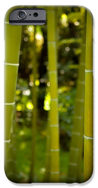 Forest iPhone Cases - Mystical Bamboo iPhone Case by Sebastian Musial