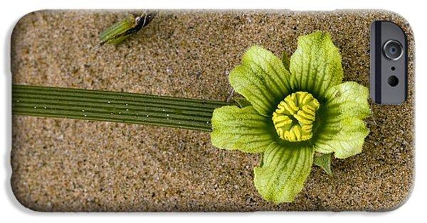 Nara iPhone Cases - Nara Plant Flower (acanthosicya Horrida) iPhone Case by Bob Gibbons