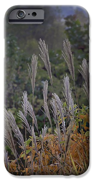 Fall Scenes iPhone Cases - Natures Layers iPhone Case by Rob Travis