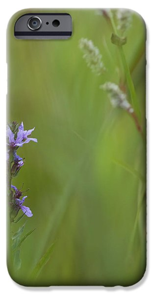 Natures Poetry... iPhone Case by Nina Stavlund
