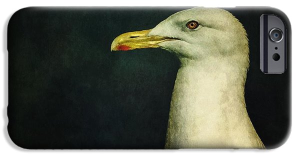 Animal Photographs iPhone Cases - Naujaq iPhone Case by Priska Wettstein