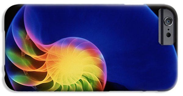 Shell Spiral iPhone Cases - Nautilus Shell iPhone Case by D. Roberts