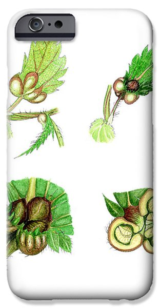 Nettle Leaf Galls iPhone Case by Dr Keith Wheeler