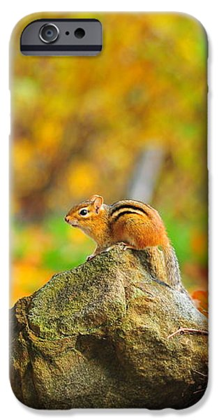 New Hampshire Chipmunk iPhone Case by Catherine Reusch  Daley