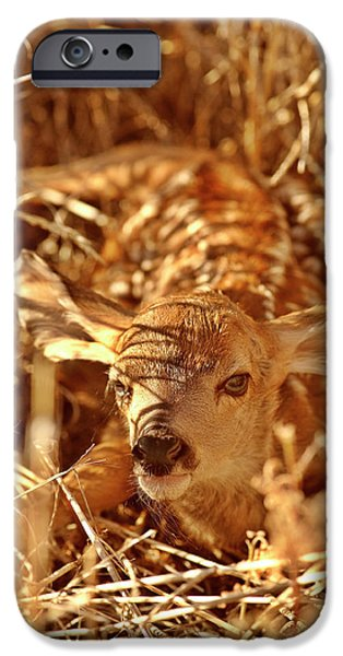 Newborn Fawn iPhone Case by Mark Duffy