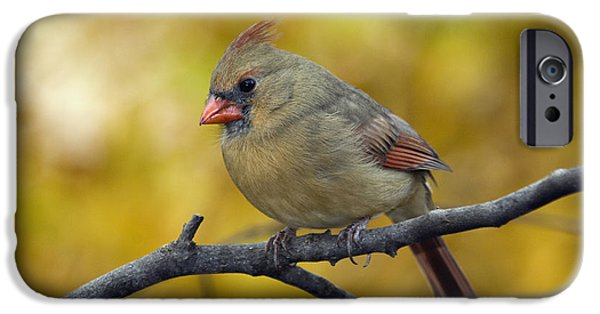 Indiana Autumn iPhone Cases - Northern Cardinal Female - D007849-1 iPhone Case by Daniel Dempster