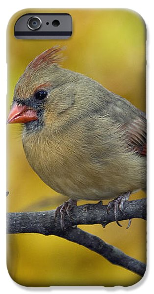Northern Cardinal Female - D007849-1 iPhone Case by Daniel Dempster