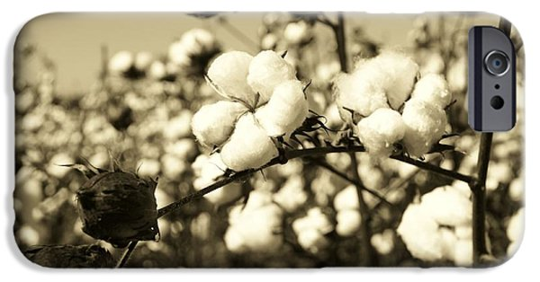 Botanical iPhone Cases - O Sweet Cotton iPhone Case by Sean Cupp