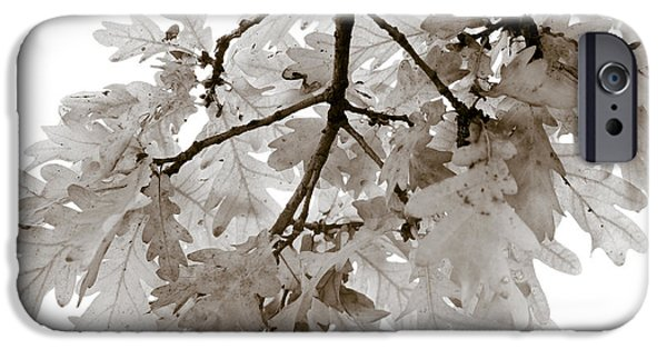 Botanical Photographs iPhone Cases - Oak Leaves iPhone Case by Frank Tschakert