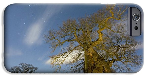 Snowy Night iPhone Cases - Oak (quercus Robur) iPhone Case by Bob Gibbons
