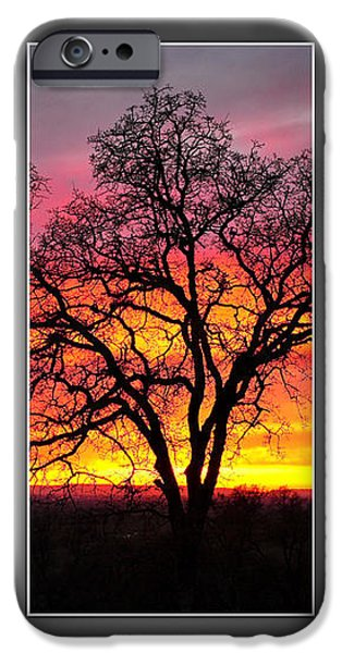 Oak Silhouette Tryptych 1 iPhone Case by Cheryl Young