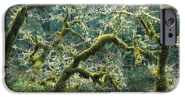 Oak Creek iPhone Cases - Oak Trees Covered With Moss At Eagle iPhone Case by Tim Fitzharris