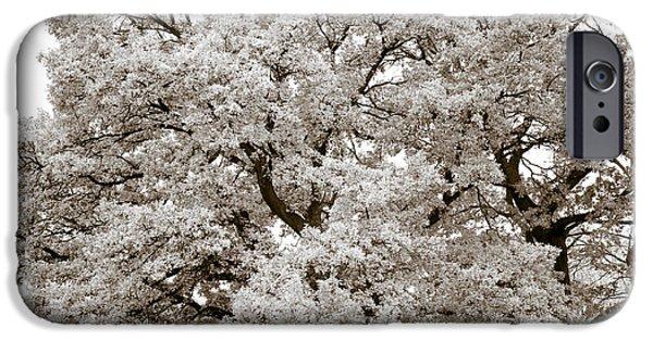 Botanical Photographs iPhone Cases - Oaks iPhone Case by Frank Tschakert