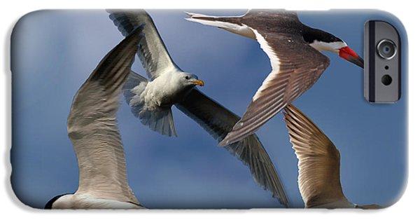 Sea Birds iPhone Cases - Ocean Bird Collage iPhone Case by David Salter