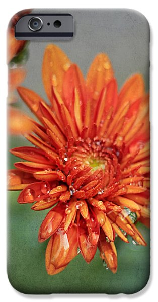 October Mums iPhone Case by Darren Fisher