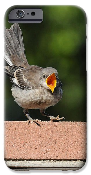 Oh...So Demanding iPhone Case by Lynn Bauer