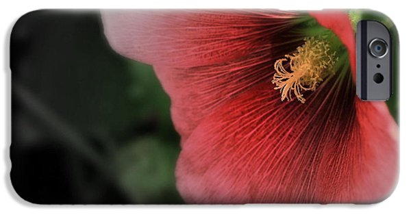Hollyhock iPhone Cases - Old Fashioned Hollyhock - Abstract iPhone Case by Marjorie Imbeau