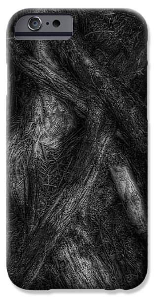 Old Silvery Roots iPhone Case by David Gordon