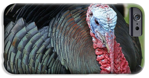 Best Sellers -  - Eastern Wild Turkey iPhone Cases - Old Wild Tom iPhone Case by Susan A Walton
