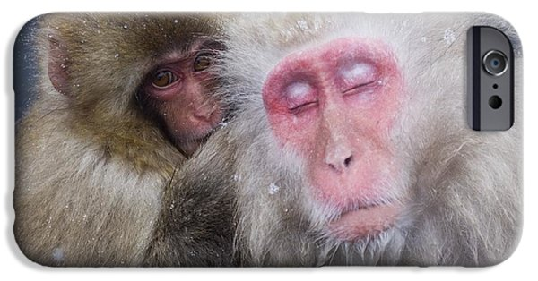Sit-ins iPhone Cases - Older Snow Monkey Being Groomed By A iPhone Case by Natural Selection Anita Weiner