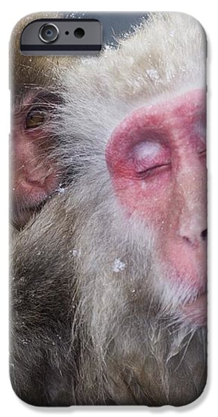 Older Snow Monkey Being Groomed By A iPhone Case by Natural Selection Anita Weiner
