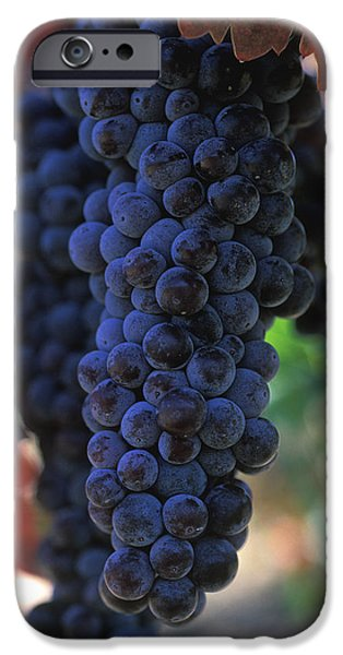 Vineyard Prints iPhone Cases - On the Vine iPhone Case by Kathy Yates