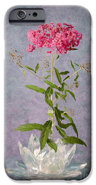 Spirea iPhone Cases - One Stem iPhone Case by Betty LaRue