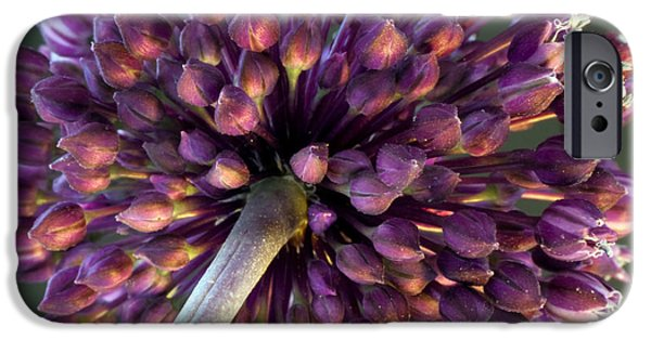 Alliums iPhone Cases - Onion Flower iPhone Case by Stylianos Kleanthous