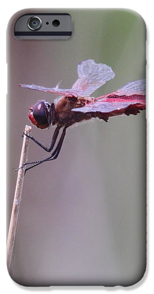 Open Mic Night At The Swamp iPhone Case by Robert Frederick