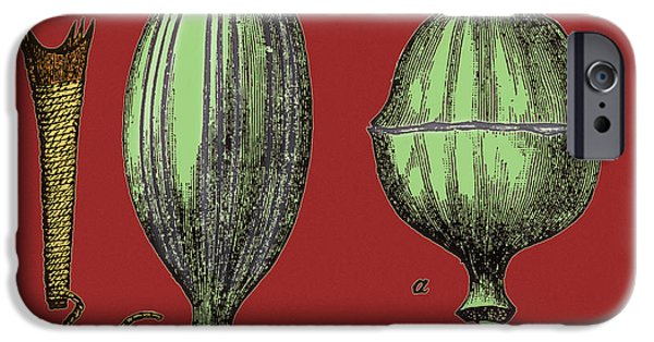 Color Enhanced iPhone Cases - Opium Harvesting iPhone Case by Science Source