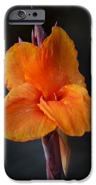 Canna iPhone Cases - Orange Canna Lily iPhone Case by Melanie Moraga