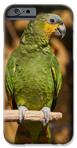Islamorada iPhone Cases - Orange-winged Amazon Parrot iPhone Case by Adam Romanowicz