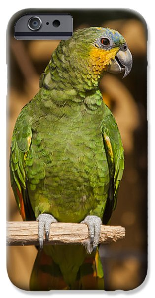 Orange-winged Amazon Parrot iPhone Case by Adam Romanowicz