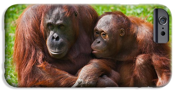 Feeding Young iPhone Cases - Orangutan mother and child iPhone Case by Gabriela Insuratelu