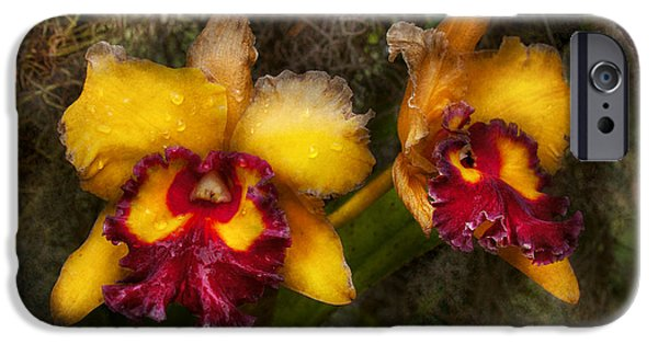 Cattleya iPhone Cases - Orchid - Cattleya - Dripping with passion  iPhone Case by Mike Savad