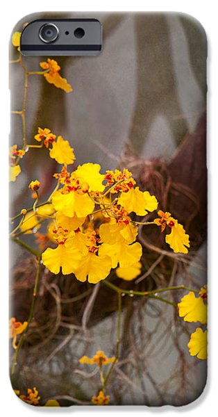 Cattleya iPhone Cases - Orchid - Golden morning  iPhone Case by Mike Savad