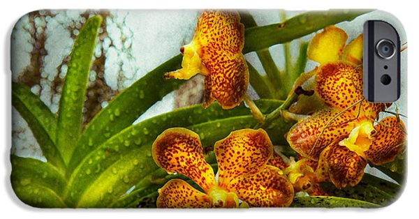 Cattleya iPhone Cases - Orchid - Oncidium - Ripened   iPhone Case by Mike Savad