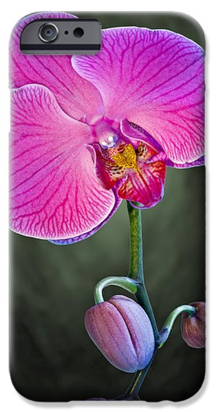 Botanical iPhone Cases - Orchid and Buds iPhone Case by Susan Candelario