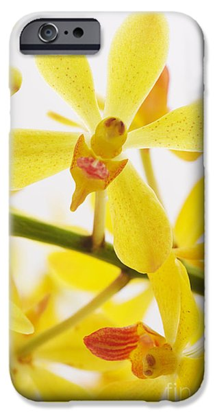 orchid iPhone Case by ATIKETTA SANGASAENG